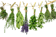 Herbs-PNG-Photo